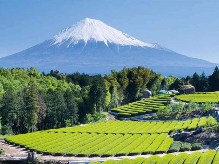 Mount Fuji and the city of Tokyo with Costa Cruises